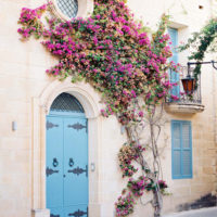 house-flowers-1